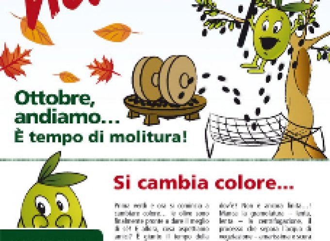 Olio extra vergine Dop Redoro: bimbi e nonni, dalla raccolta alla molitura delle olive del Garda