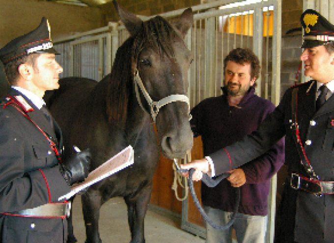 """I NAC a """"Fieracavalli"""" per sensibilizzare l'attenzione sul fenomeno criminale delle corse clandestine dei cavalli"""