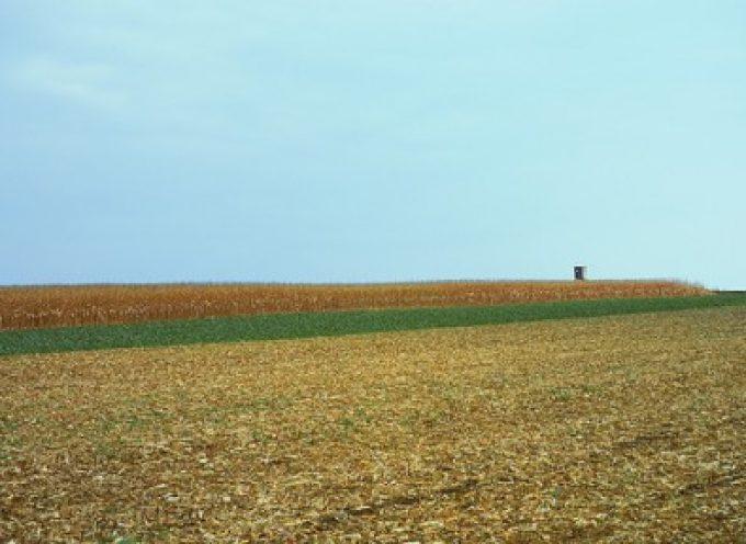 """Coldiretti: """"Definire un piano di dismissioni e di valorizzazione dei terreni agricoli pubblici"""""""