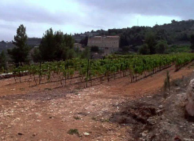 Vini lombardi: Gerusalemme è la nuova tappa per la campagna As.co.vi.lo.