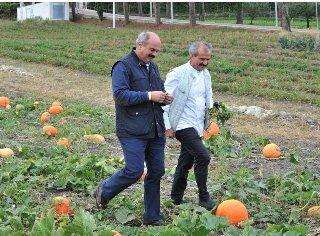 Oscar Farinetti: la cucina migliore d'Italia? Si trova a Orsara di Puglia