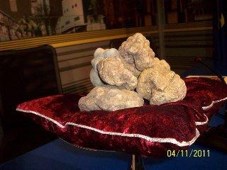 15 settembre 2012: Inizia la raccolta del tartufo bianco d'Alba