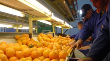 Fruit Logistica: In Piazza Italia Oranfrizer ha rappresentato il settore agrumicolo
