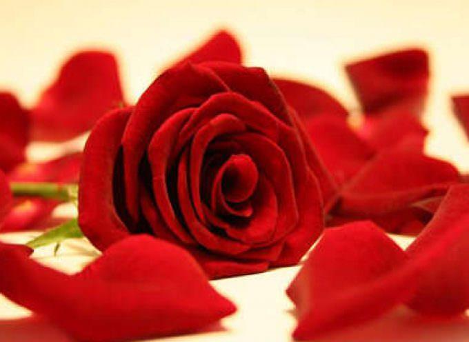 San Valentino: I giovani prenotano i fiori per essere sicuri di non mancare l'appuntamento