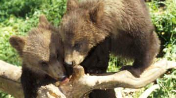 Campoli Appennino (FR) apre le porte agli amanti del tartufo e degli… orsi