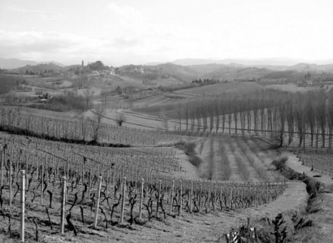 Piemonte Anteprima Vendemmia 2013: dati su Vigneti, Cantine, produzione, DOCG, DOC, export…