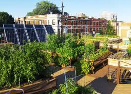 Rooftop farming, frutta e verdura biologiche sui tetti delle città