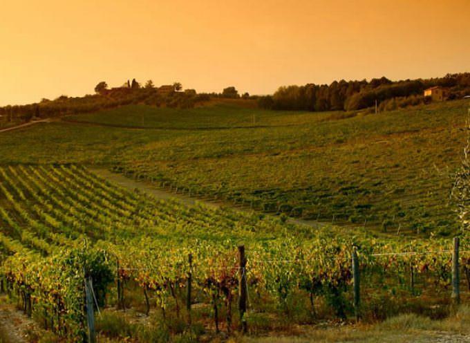 Dalla viticoltura toscana due novità
