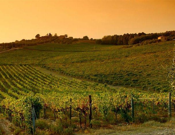 Paleo Rosso e Toscana: 20 scatti per il matrimonio del vino