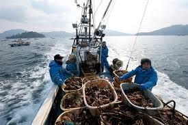 Giappone. Le ostriche di Yamada nel post-tsunami
