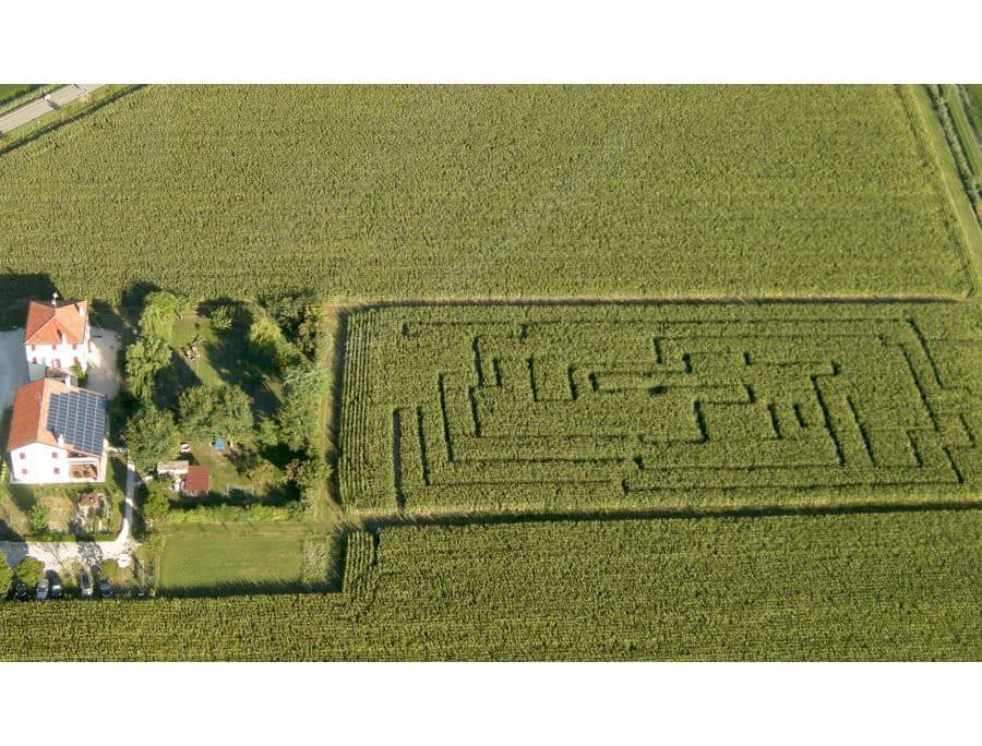 Sei mai entrato in un labirinto creato in un campo di grano?