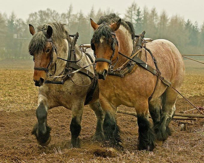 Ad Alborina (AL) il 12-13 maggio la Festa del Cavallo da Tiro