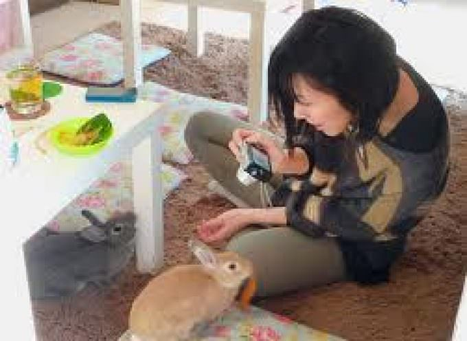 Conigli e bevande: il Giappone presenta il rabbit-cafè