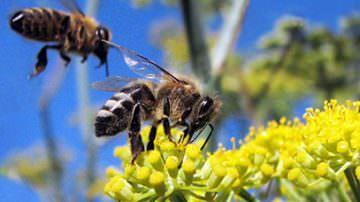 """Progetto """"APENET: monitoraggio e ricerca in apicoltura"""""""