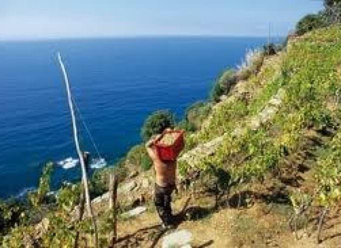 VINIDAMARE 2012: IX Rassegna dei Vini della Liguria