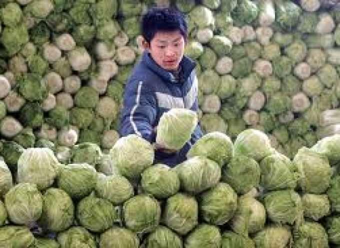 Cina, pericolo formaldeide per i cavoli