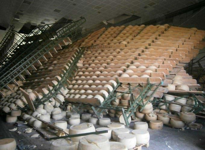 200 mila forme di Grana e di Parmigiano distrutte dal terremoto