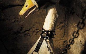 California. Vittoria degli animalisti: presto il bando del foie gras