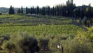 Chianti Classico più energia solare: questa è Agricola San Felice