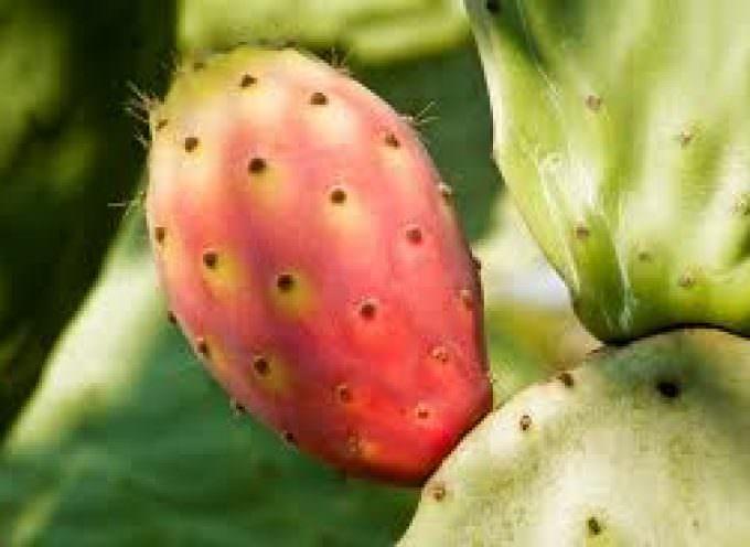Fuoco e Frutta: Catania celebra ciliegia e fico d'India DOP