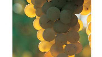 Gavi, il vino produce energia