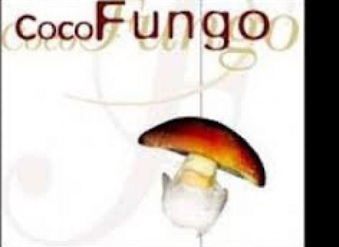 Cocofungo: un mondo di funghi in cucina