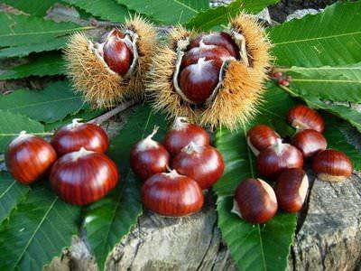 Il regno del marrone, prodotti freschi biologici dal 1957