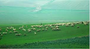 """Lana e Pecore dell'Alta Murgia in """"Parnersheep"""" con Slowfood"""