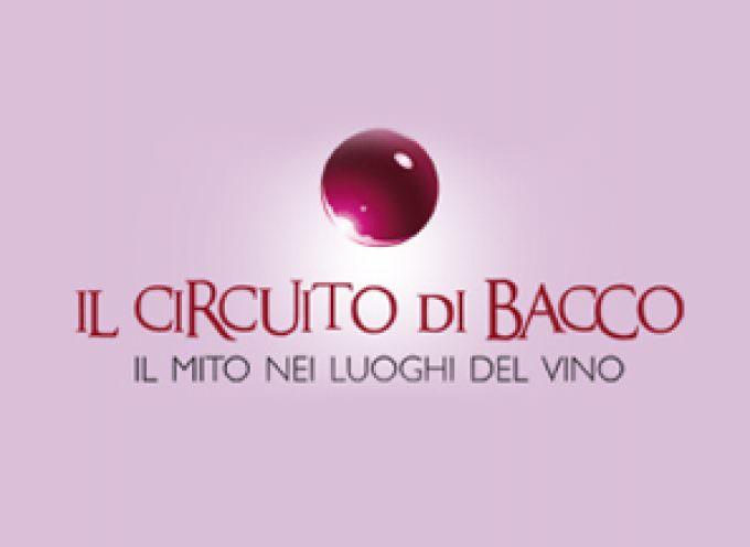 Vino, turismo, cultura. In Sicilia col Circuito di Bacco
