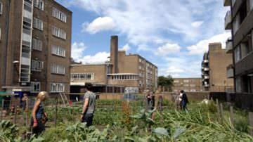 Agricoltura urbana, prodotto il 20% del cibo mondiale