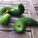 Culinary Misfits: la frutta e verdura recuperata diventa trendy