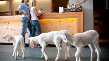 Lana di pecora della Val d'Ultimo: uno scialle vale più di una mantella di zibellino