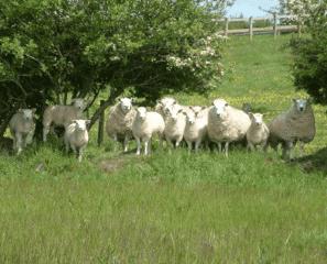 Welsh lamb: Intervista a Jeff Martin