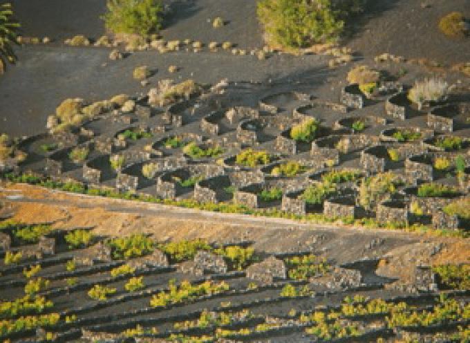 El Fuego, la tierra y el viento ovvero… la Malvasia di Lanzarote