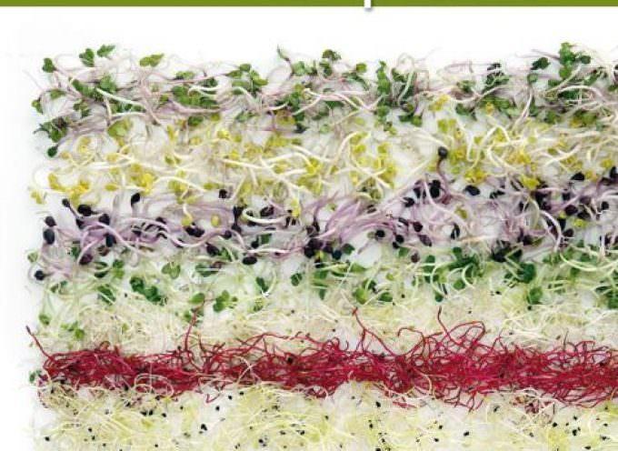 Giuliana Lomazzi: I germogli nel piatto …germogli di vita