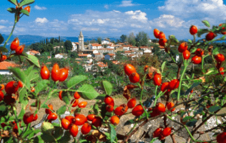 Istria slovena: Festa del Vino e dell'Aglio a Nova Vas