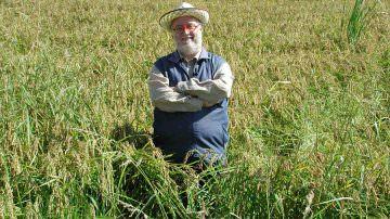 Melaverde: Domenica 22 settembre si parlerà di un riso invecchiato 7 anni