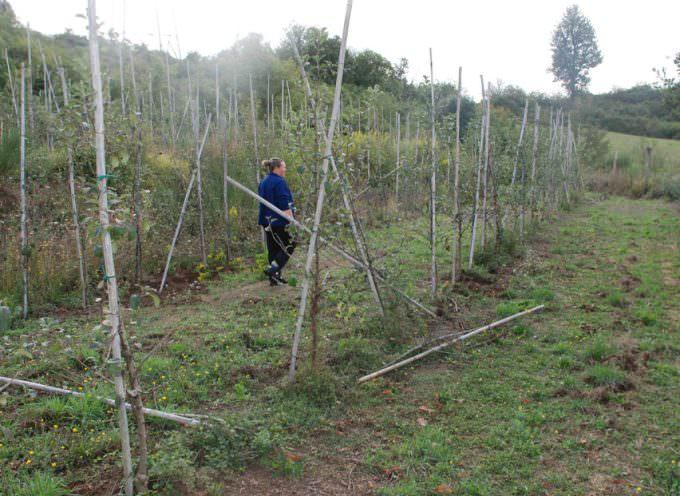 Lunigiana: Varietà autoctone minacciate dalla presenza degli ungulati
