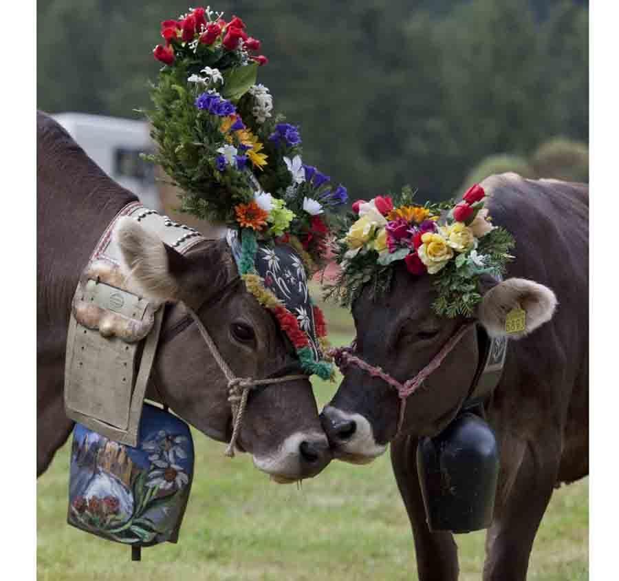 """Passo San Pellegrino (TN): Si festeggia """"La Desmontegada"""""""