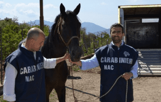 Verona: I NAC a Fieracavalli