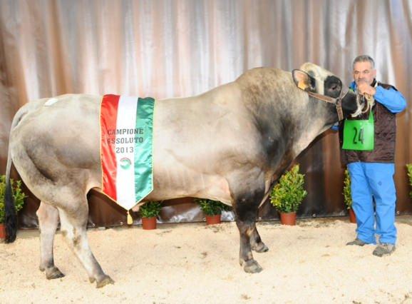 Cuneo: Conclusa la 34ª Mostra Nazionale della Razza Piemontese Italiana