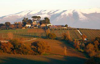 Ospitalità enoturistica a tutto tondo nell'azienda vitivinicola Antonelli San Marco