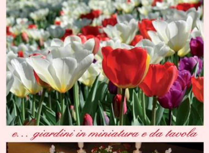 Torino: Presentazione della XV edizione di Meser Tulipano