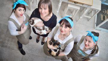"""A Torino arriva """"MiaGola Caffé"""", il primo """"cat café"""", locale per gatti in Italia"""