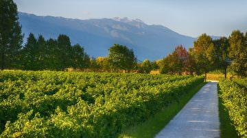 Vinitaly 2014, i Vini Venezia lasciano l'impronta