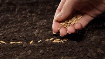Prodotti tipici a rischio: La Cia chiede un decreto per vietare la semina OGM in Italia