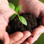 Le mani nella terra: i giovani tornano all'agricoltura