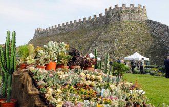 Fiori nella Rocca, la Mostra mercato di piante rare alla Rocca Visconteo-Veneta di Lonato del Garda (Brescia)