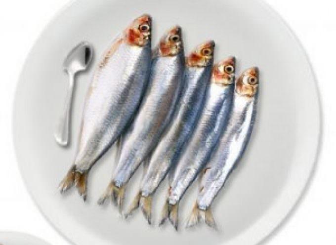 Pesce azzurro: sonno più lungo e di qualità
