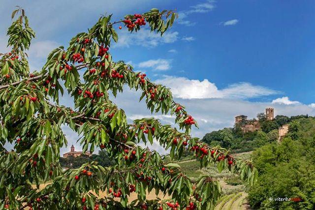Diciottesima Sagra della ciliegia di Longiano